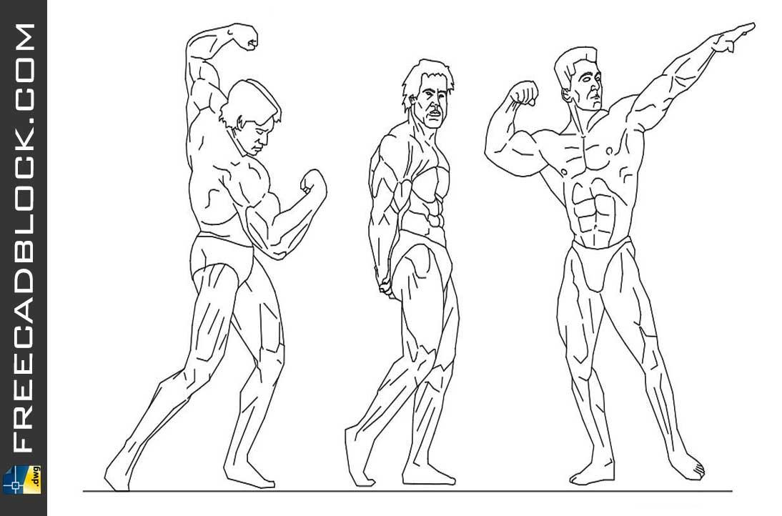 Drawing Bodybuilder dwg